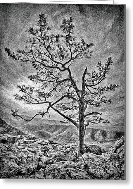 Greeting Card featuring the photograph Tree And Rocks In The Blue Ridge Near Sunset Bw by Dan Carmichael