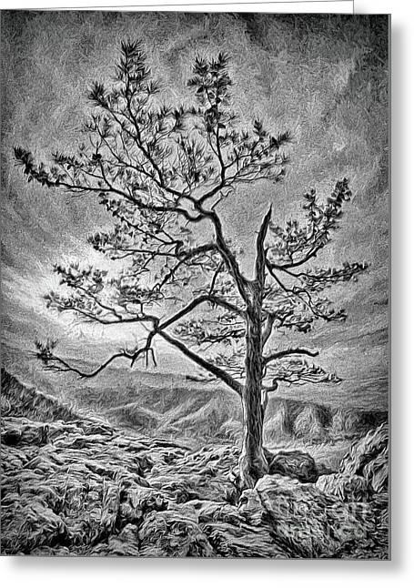 Tree And Rocks In The Blue Ridge Near Sunset Bw Greeting Card by Dan Carmichael
