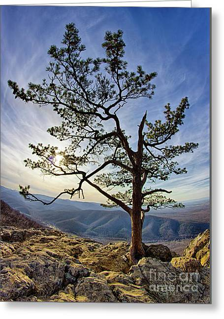 Greeting Card featuring the photograph Tree And Rocks In The Blue Ridge Near Sunset by Dan Carmichael