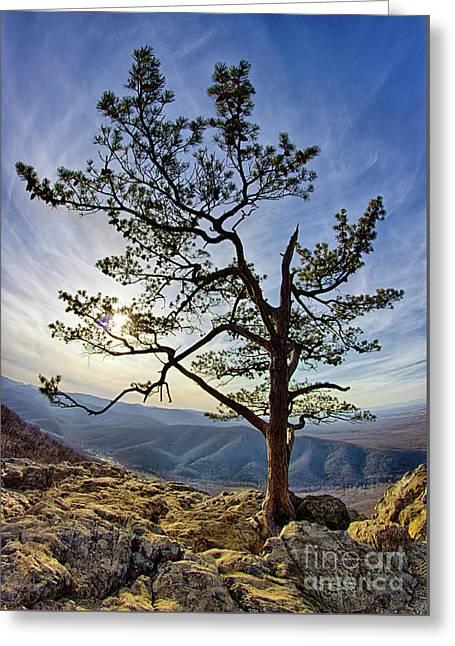 Tree And Rocks In The Blue Ridge Near Sunset Greeting Card by Dan Carmichael