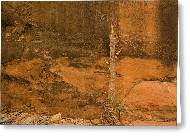 Tree And Sandstone Greeting Card