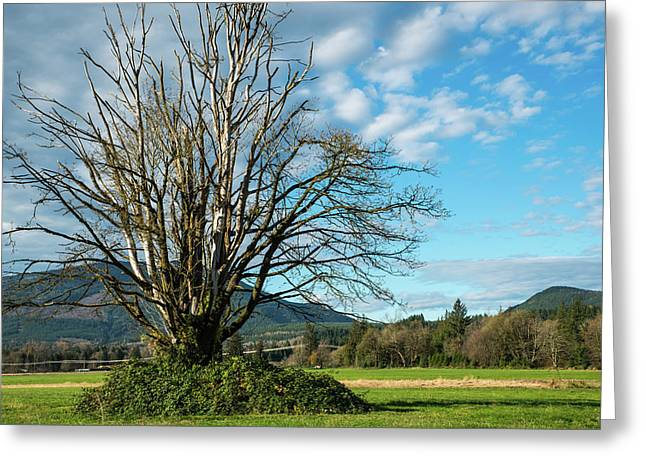 Tree And Sky Greeting Card