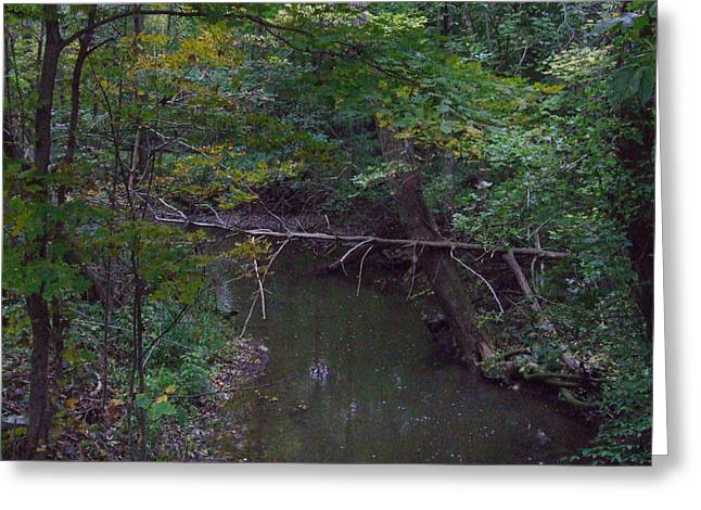 Tree And Stream Greeting Card by Michael L Kimble