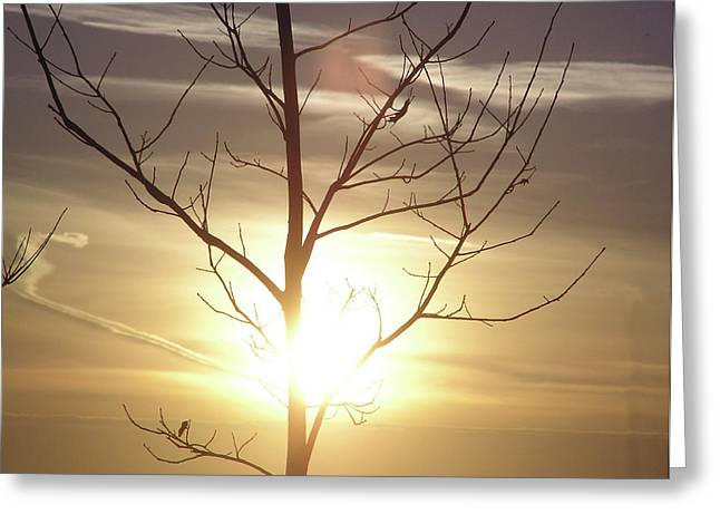 Tree And Sun Greeting Card by Richard Mitchell