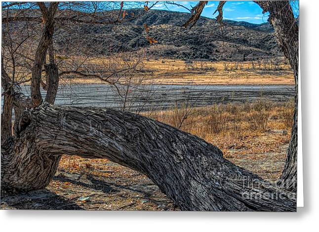 Tree At Elizabeth Lake Greeting Card