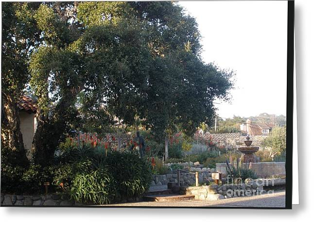 Tree At Mission Carmel Greeting Card