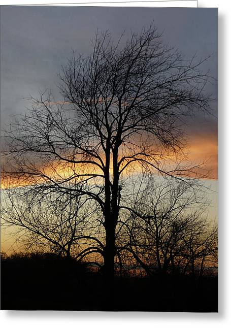 Tree At Sunset Greeting Card by Jerry Weinstein