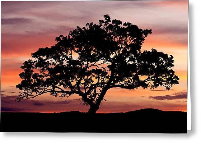 Photos Of Trees Greeting Cards - Tree at Sunset Greeting Card by Paul Huchton