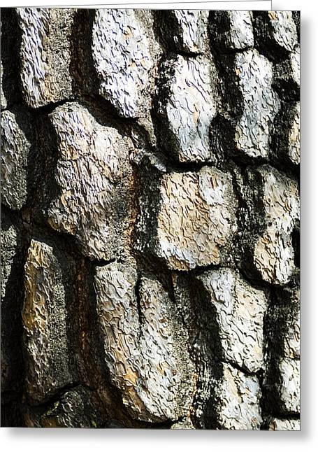 Tree Bark Greeting Card by Bill Brennan - Printscapes