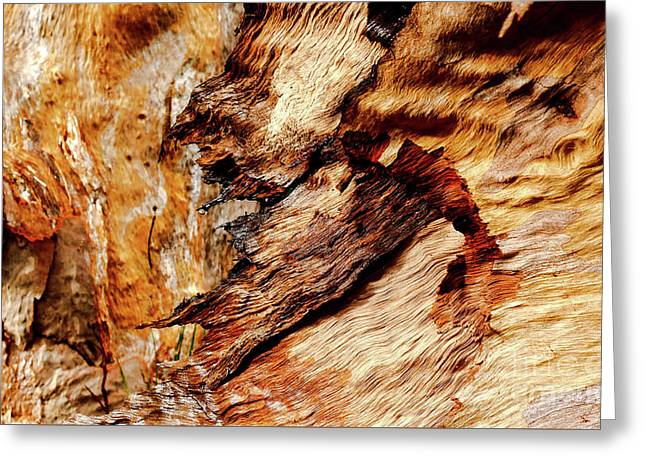 Tree Bark Series  - Patterns #2 Greeting Card by Lexa Harpell