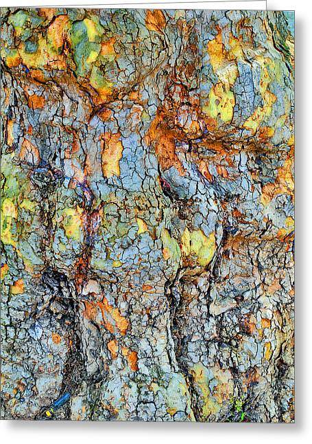Tree Bark. Textures. Greeting Card by Andy Za