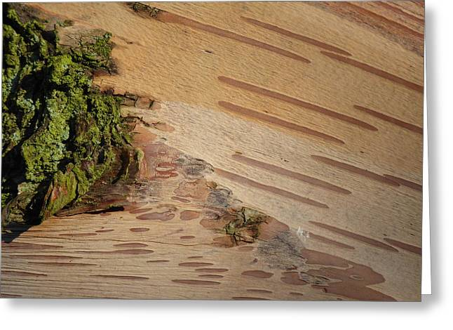 Tree Bark With Lichen Greeting Card by Margaret Brooks