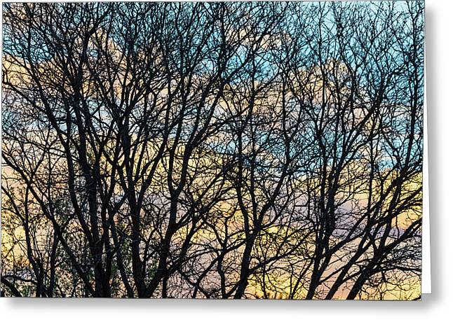 Greeting Card featuring the photograph Tree Branches And Colorful Clouds by James BO Insogna