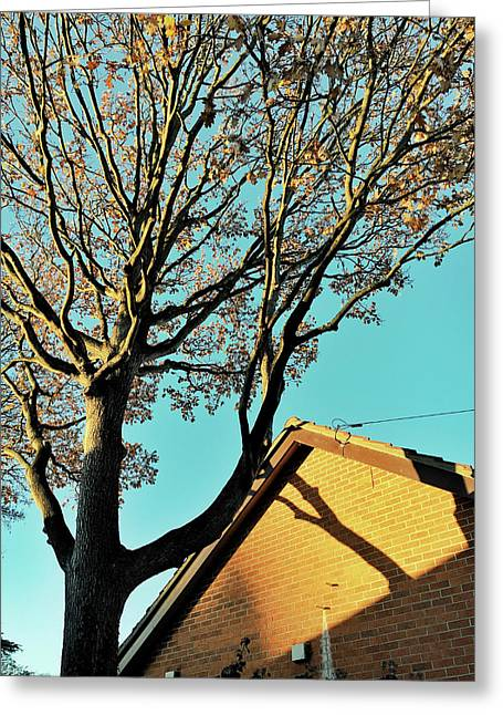 Tree Branches Pattern Greeting Card