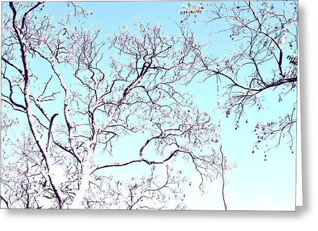Tree Branches Reaching For Heaven 2 Greeting Card by Patricia Awapara