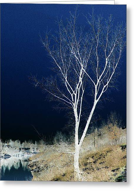 Tree By Stream Greeting Card by Stuart Turnbull