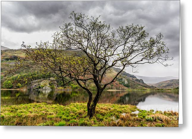 Tree By The Lake Greeting Card by Adrian Evans