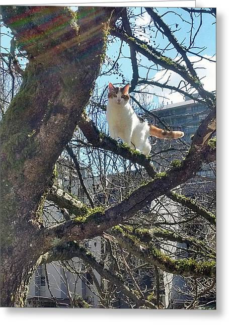 Greeting Card featuring the photograph Tree Climber by Bill Thomson