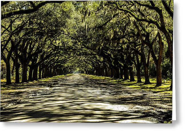 Tree Covered Approach Greeting Card
