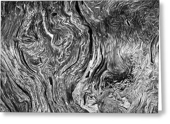 Tree Cross Section Abstract. Taken In Greeting Card