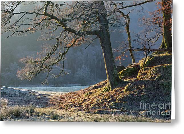 Tree Details, Elterwater Greeting Card