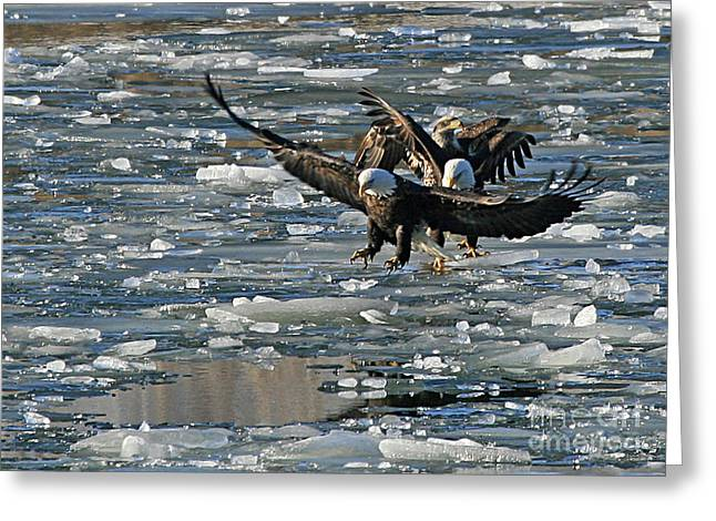 Tree Eagles On Ice Greeting Card