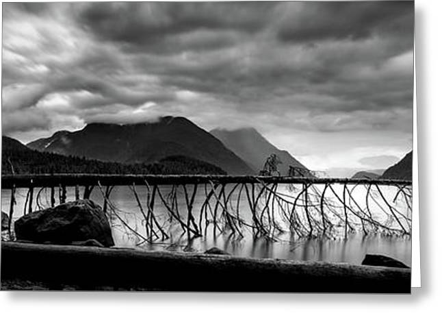 Tree Fall At Alouette Lake Greeting Card