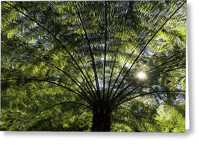 Tree Fern Sunburst Greeting Card