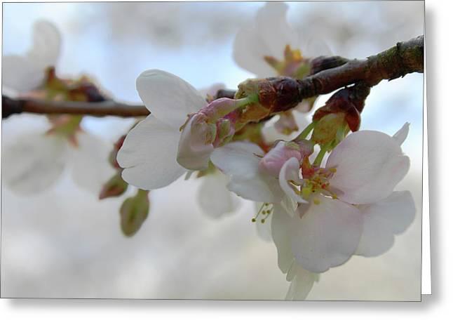 Dogwood Branch Pink Greeting Card