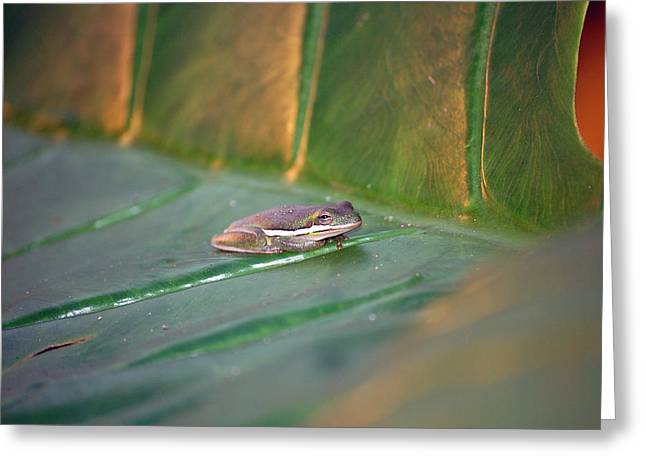 Tree Frog Greeting Cards - Tree Frog III Greeting Card by Robert Meanor