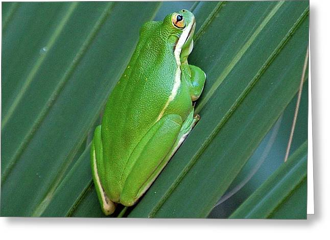 Tree Frog Of The Fronds Greeting Card
