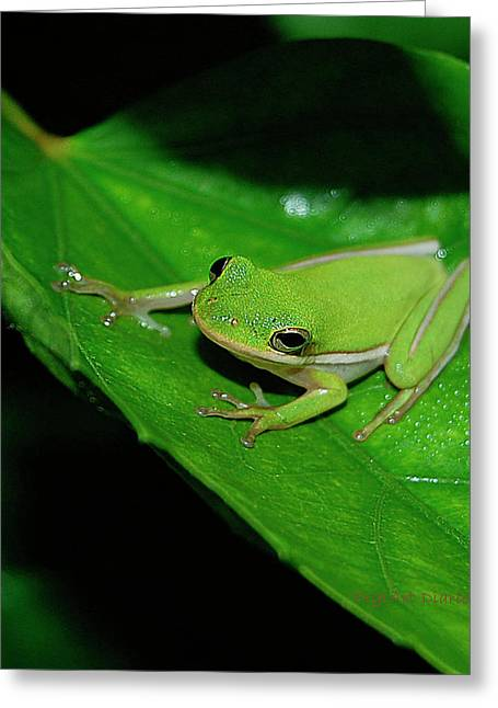 Tree Frog On Hibiscus Leaf Greeting Card by DigiArt Diaries by Vicky B Fuller
