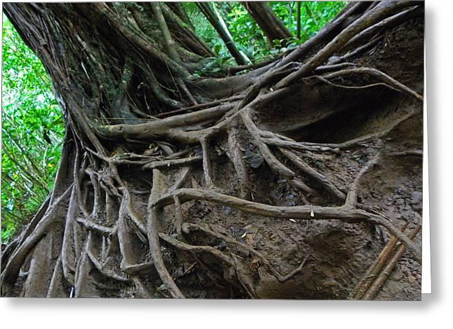 Tree From Manoa Falls Greeting Card by Elizabeth Hoskinson
