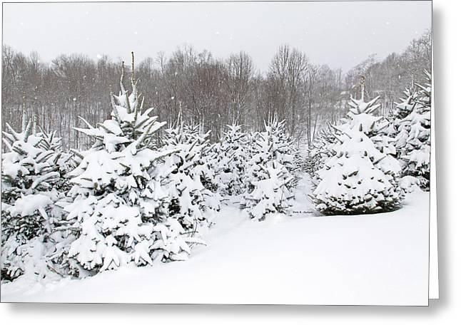 Fraser Snow Greeting Card