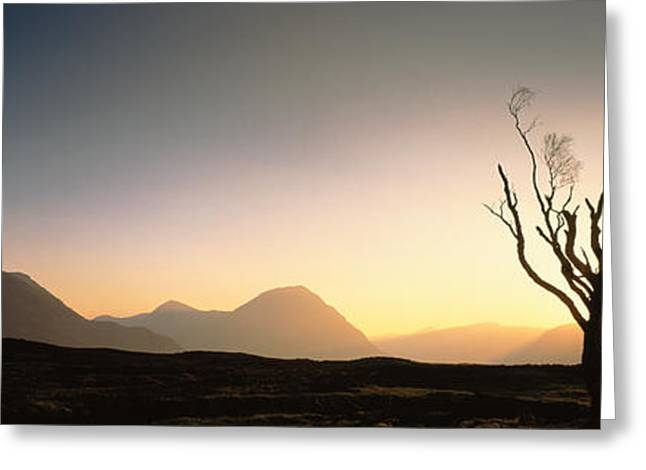 Tree Glencoe Highlands Scotland Greeting Card by Panoramic Images