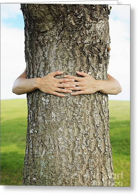 Tree Hugger 1 Greeting Card by Brandon Tabiolo - Printscapes