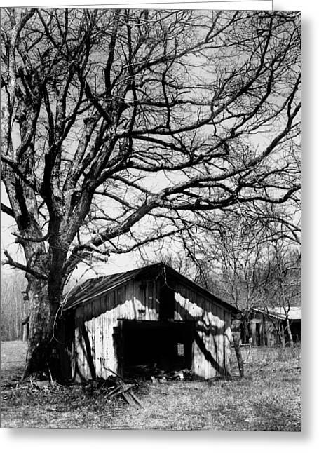 Tree-hut Greeting Card