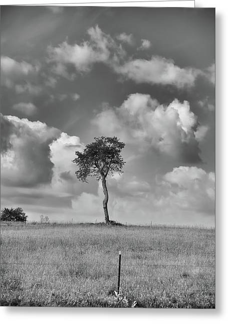 Greeting Card featuring the photograph Tree In A Field by Guy Whiteley
