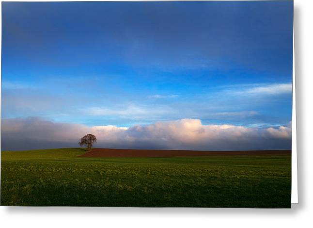 Tree In Arable Farmland Near Carlow Greeting Card