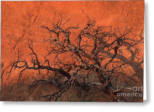 Tree In Arches Greeting Card by Stan and Anne Foster