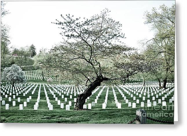 Tree In Arlington Cemetery  Greeting Card by Scott Sawyer