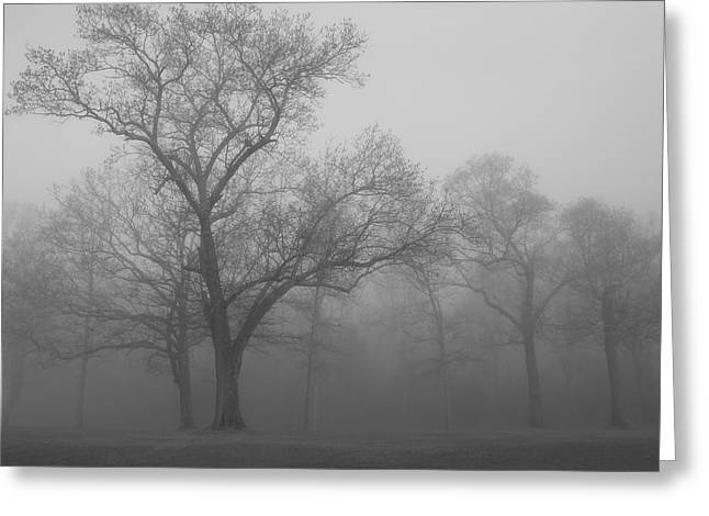 Tree In Black And White Greeting Card by James Jones