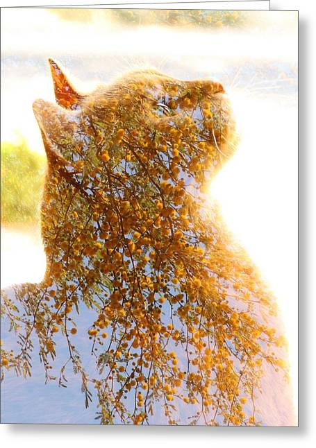 Tree In Cat Greeting Card