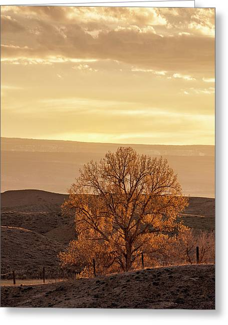 Tree In Desert At Sunset Greeting Card