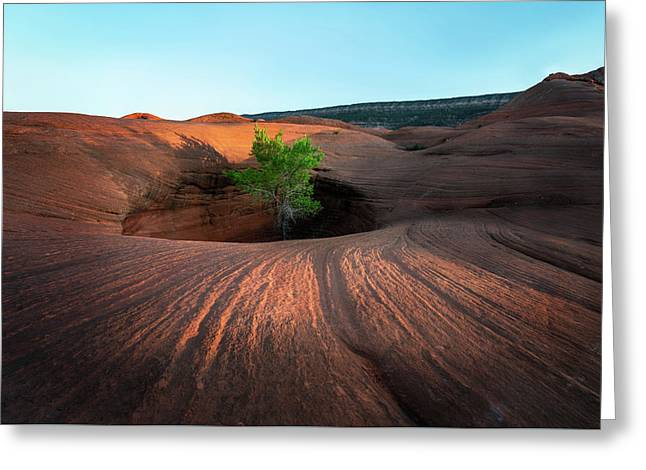 Tree In Desert Pothole Greeting Card