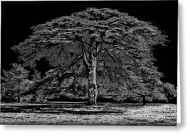 Tree In England Greeting Card