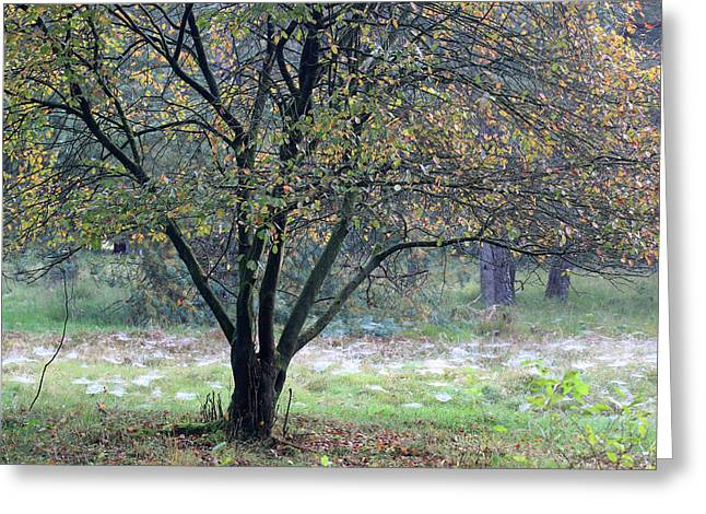 Tree In Forest With Autumn Colors Greeting Card