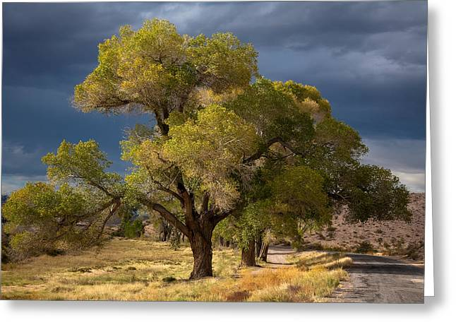 Tree In Nevada Greeting Card