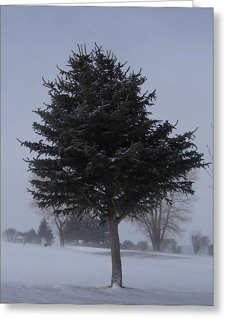 Tree In Snowstrom Greeting Card by Susan Pedrini