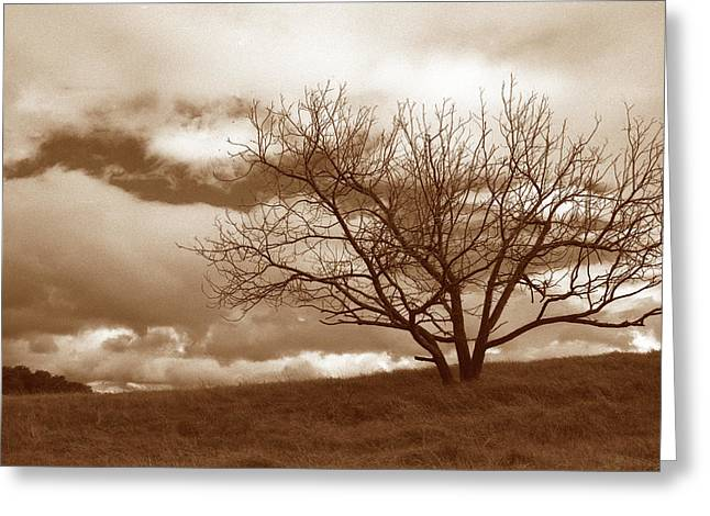 Tree In Storm Greeting Card by Kathy Yates